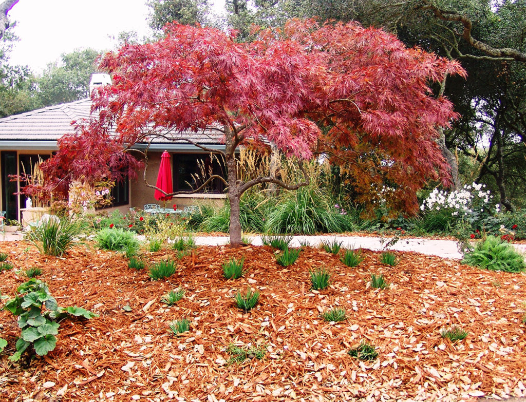 Fall Patio & Landscape